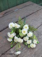 Хризантемка садовая белая