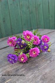 Хризантемка садовая пурпурная