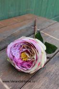 Роза пионовидная пурпурная