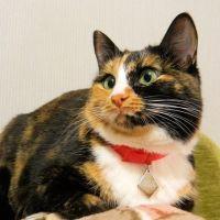 бирка для кошек Ульяновск