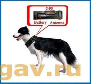Ошейник GPS KDL100 на крупных