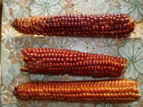 Кукуруза красная