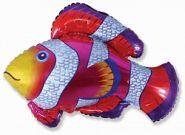 """Рыба-клоун, 34""""/ 86 см"""
