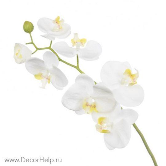 Орхидея белая арт: DCF001