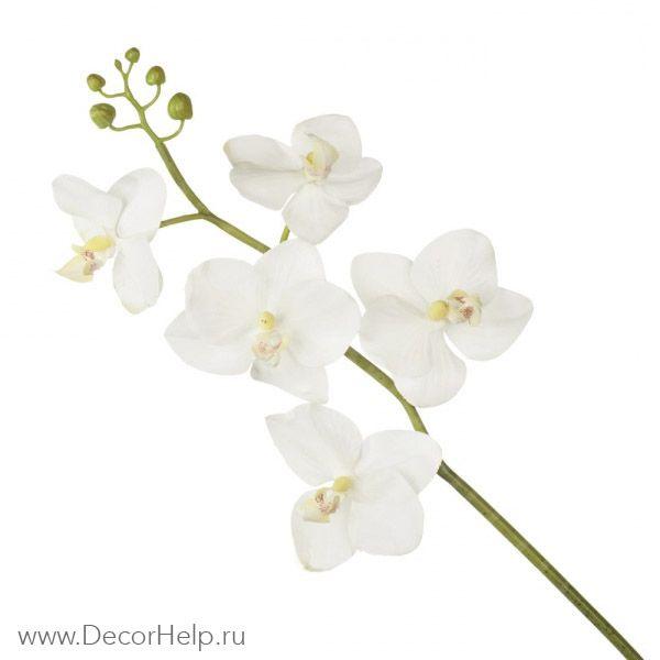 Орхидея белая (10шт) арт: DCF005
