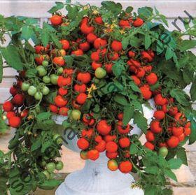 """Томат """"ЖЕМЧУЖИНА САДА"""" (Garten Perle) 10 семян"""