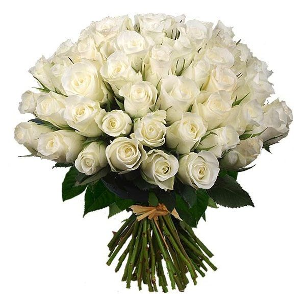 Розы белые Аваланш