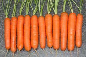 Морковь Нантская (1943г)