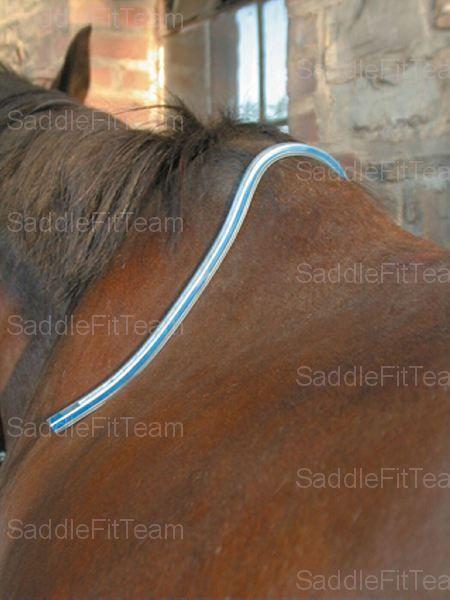 Шаблон спины лошади