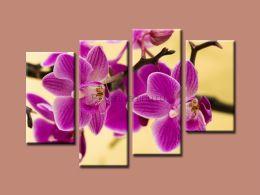 Фиолетовая орхидея 2