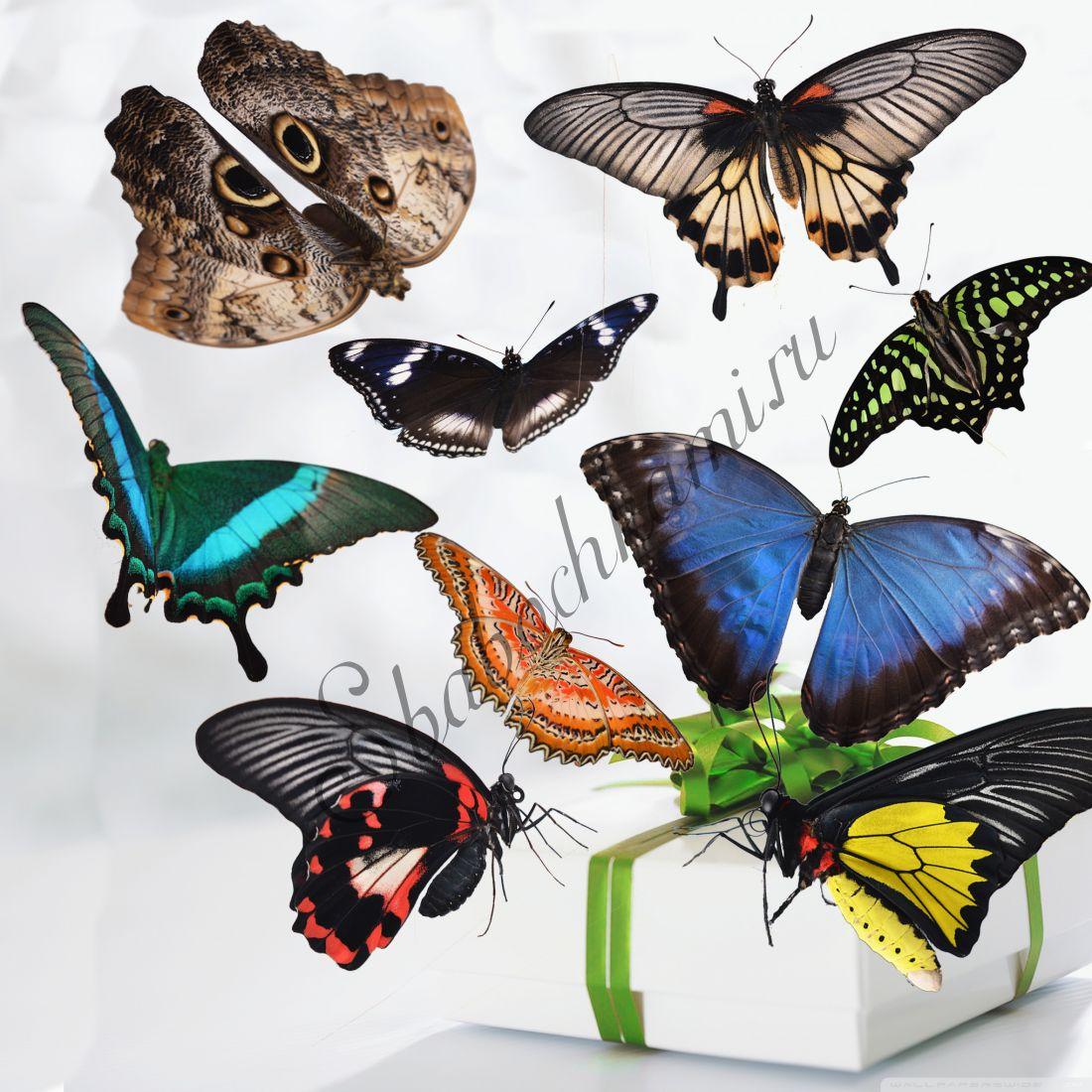 Коробка бабочек «Премиум-9»