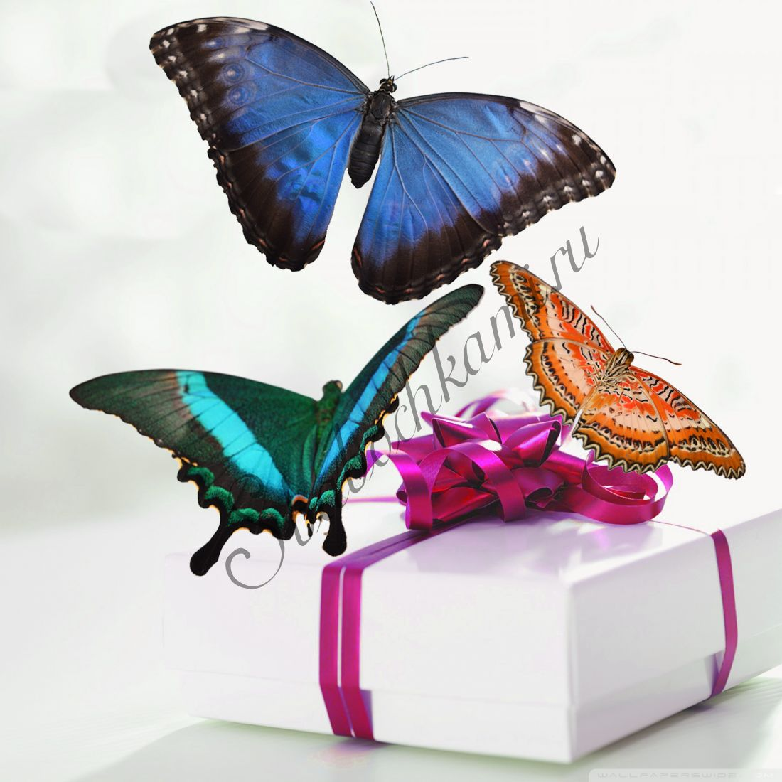 Коробка бабочек «Премиум-3»