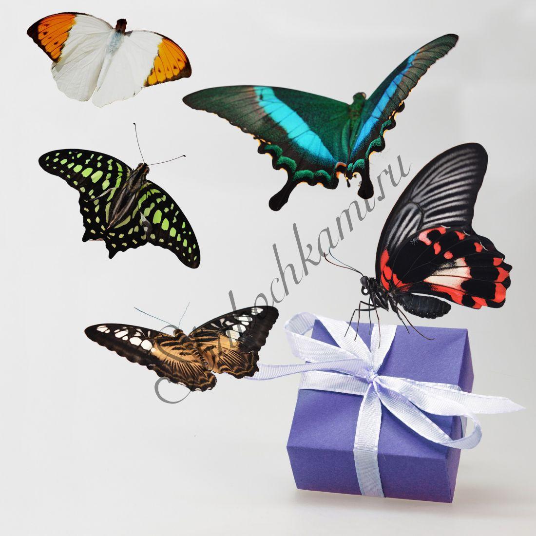 Бабочки в коробке «Стандарт-5»