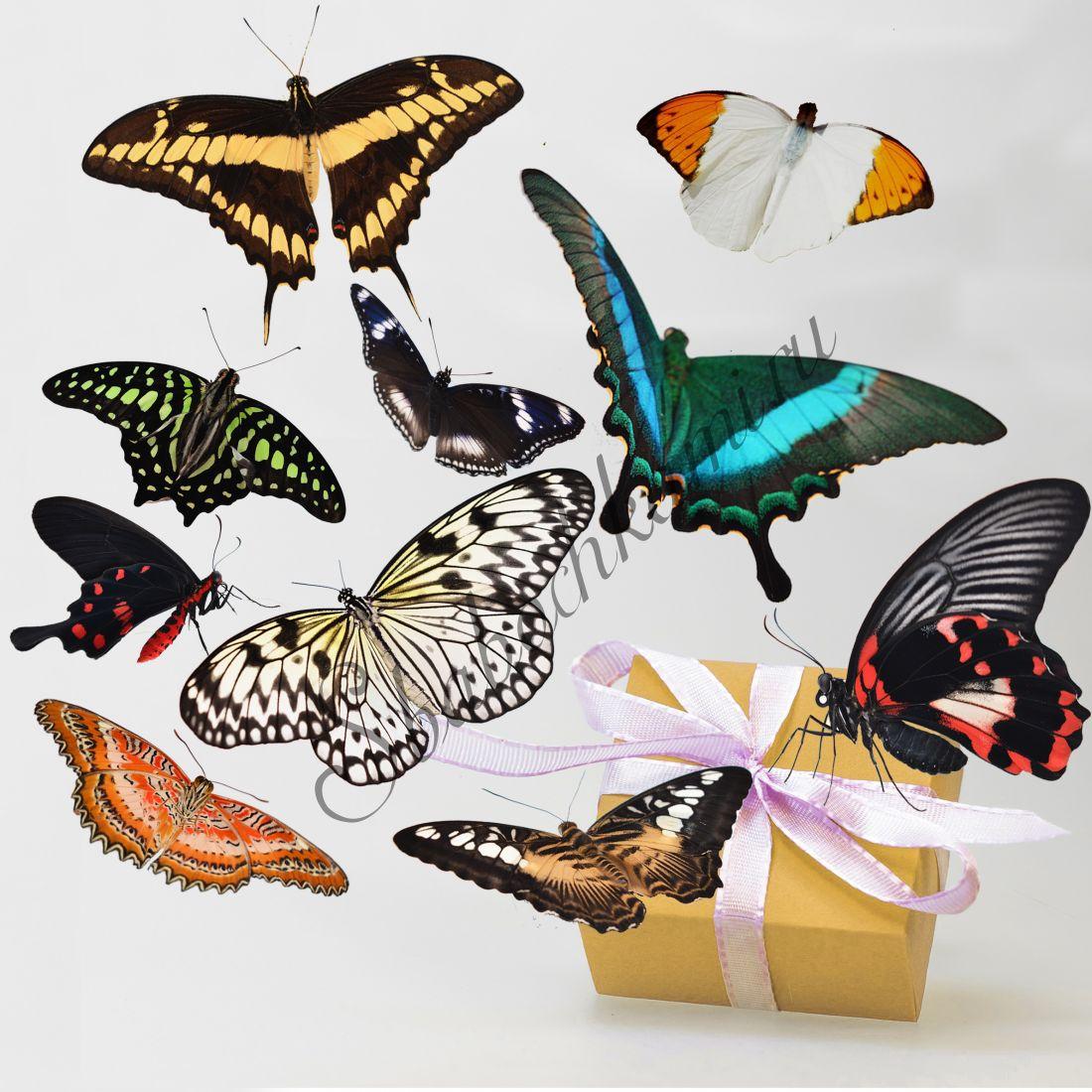 Салют из бабочек «Стандарт-10»