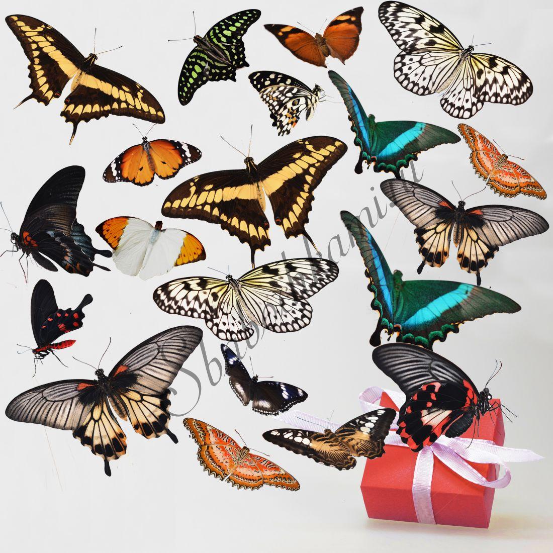 Салют из бабочек «Стандарт-20»