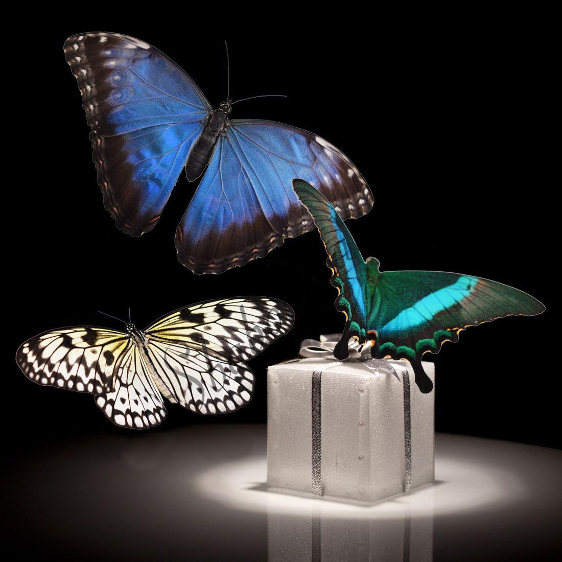 Бабочки в подарок «Люкс-3»