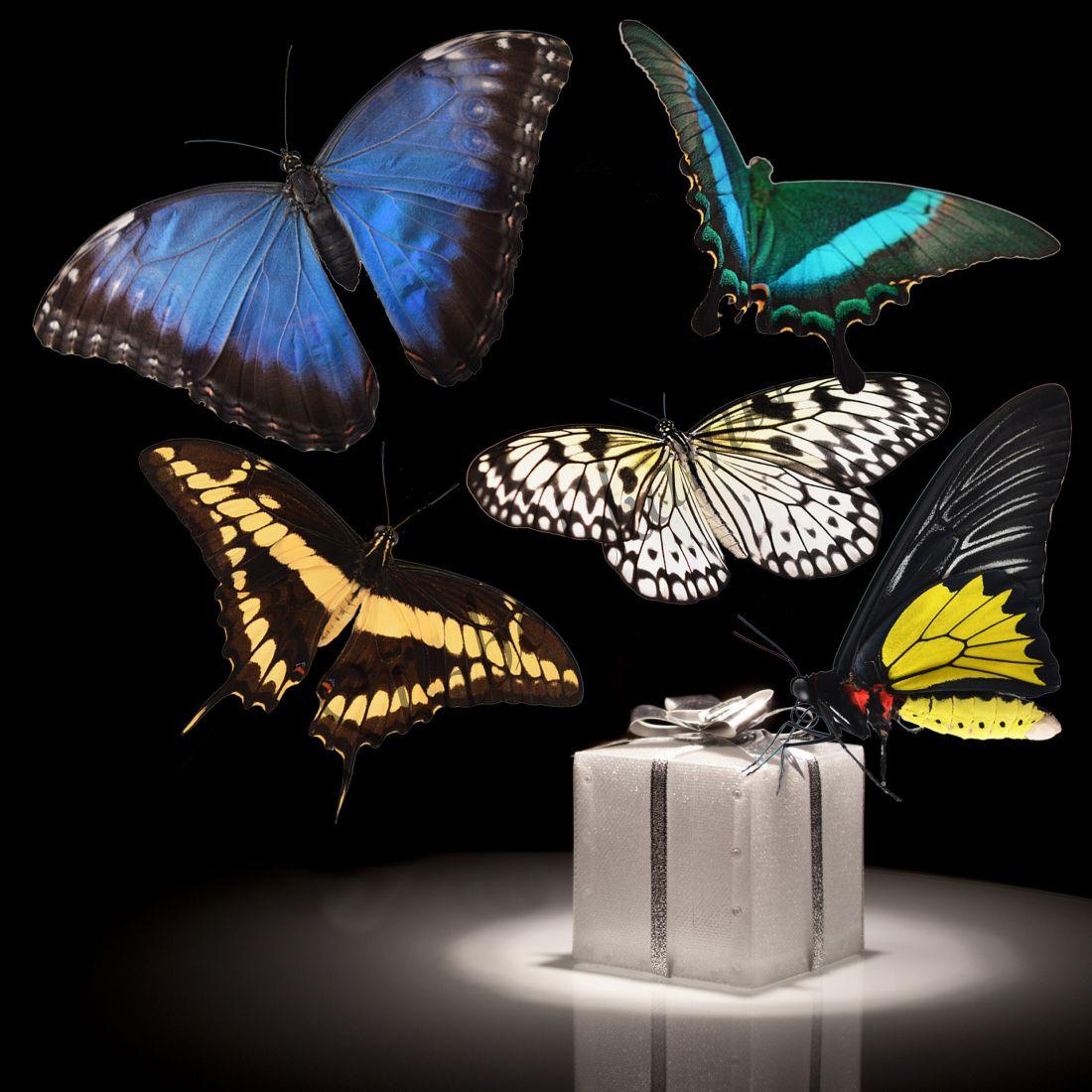 Бабочки в подарок «Люкс-5»