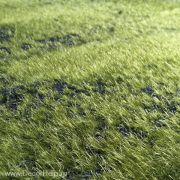 Искусственный декоративный мох в рулоне на мягкой подкладке. Ширина рулона 1м, длина 10м