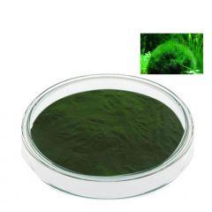 Экстракт Спирулины (содержание протеина-60%), 50 гр