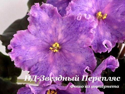 НД-Звездный Перепляс (Н.Данилова-Суворова) НОВИНКА