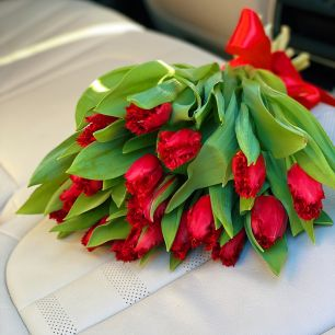 Тюльпан красный бахромчатый