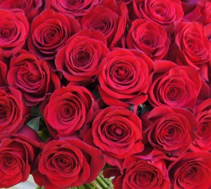 75 роз Фридом