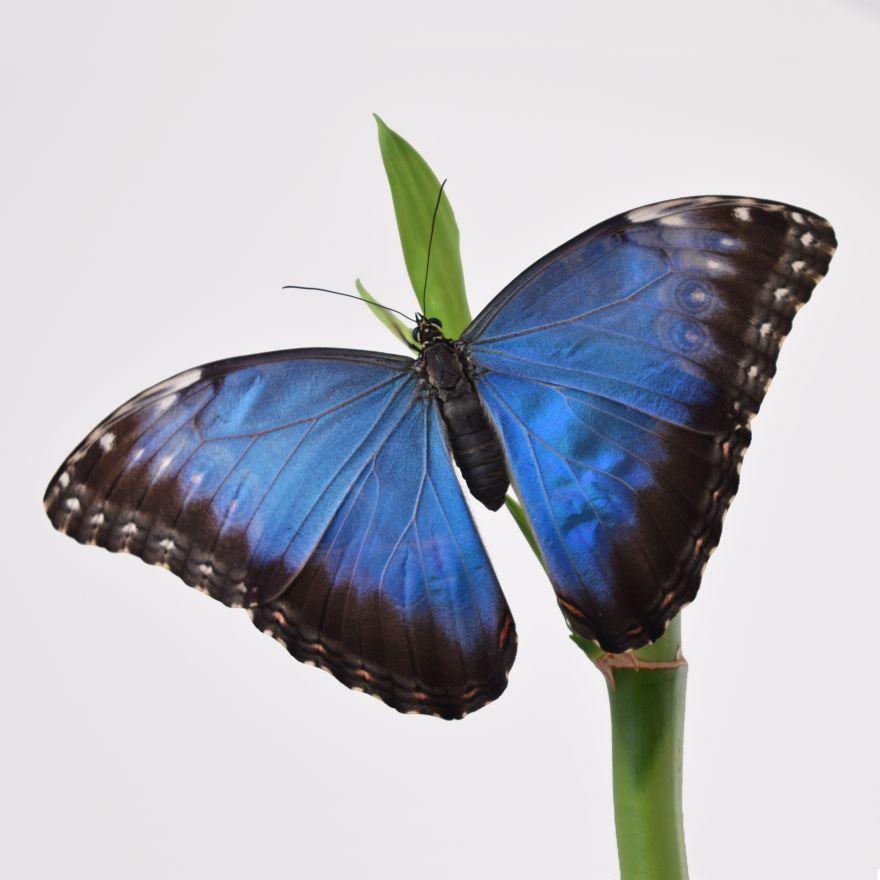 Ферма на 3 бабочки Plus