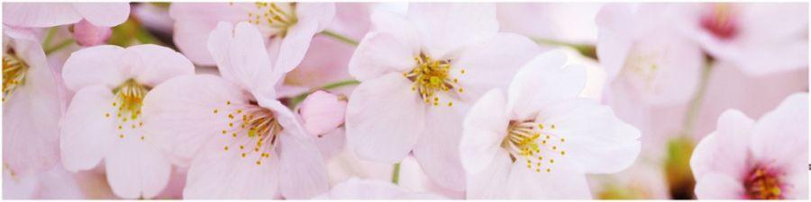 Кухонный фартук AG 06 - Цветущий сад №3 цветы