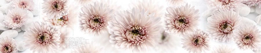 Кухонный фартук BS 67 - Розовые хризантемы цветы