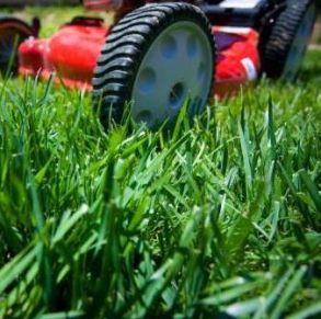 Обслуживание и уход за газоном