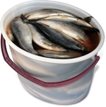 Сельдь слабой соли  тушка 450 гр Ведро 5 кг цена за 1 кг Спб