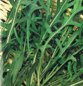 """Рукола  сорт """"ВИЛДЕ"""" (Rucola wilde)  2,5 гр.  8000 семян"""