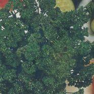 "Петрушка  сорт ""ТЁМНЫЕ КУДРЯШКИ"" (donkergroene gekruld)  3 гр.  1800 семян"