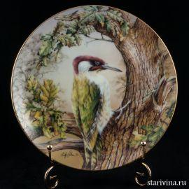 Зеленый дятел, Hamilton Collection, Англия