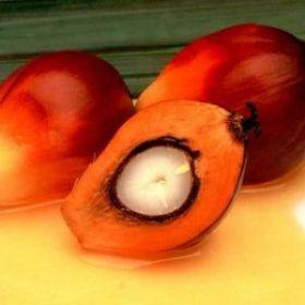 Масло пальмоядровое, рафинированное