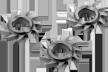 Фрезы дисковые косозубые FESTOOL HW-FZ 35 комплект из 35 шт 769051