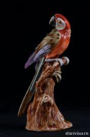 Попугай ара на дереве, Capodimonte, Италия