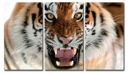 Ярость тигра