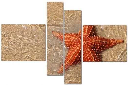 Модульная картина Морская звезда