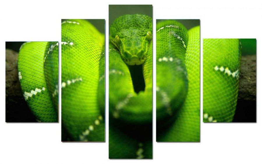 Модульная картина Зеленая змея