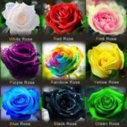 Семена самых необычных роз мира, 450 шт