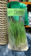 Травка для зверушек Пшеница