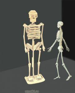 Модель деревянная сборная Скелет человека