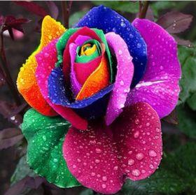 Семена радужных роз, 500 шт