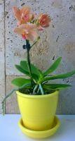 желтый с мини орхидеей