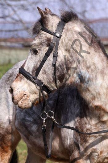 Беcтрензельная уздечка Barefoot Walnut Pony
