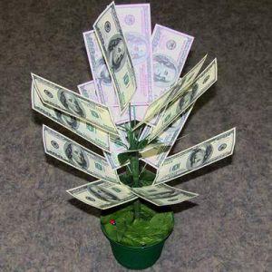 Денежное дерево 100$ большое 55см