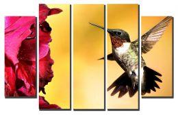 колибри и красный цветок