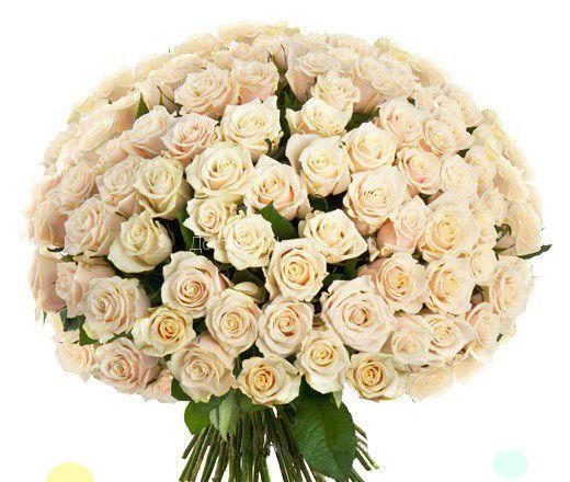 51 и 101 кремовая роза по оптовой цене