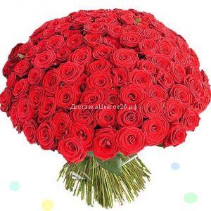 51 и 101 красная роза по оптовой цене